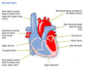 Organ transplant hospitals in delhi india organ transplant treatment heart transplant ccuart Images