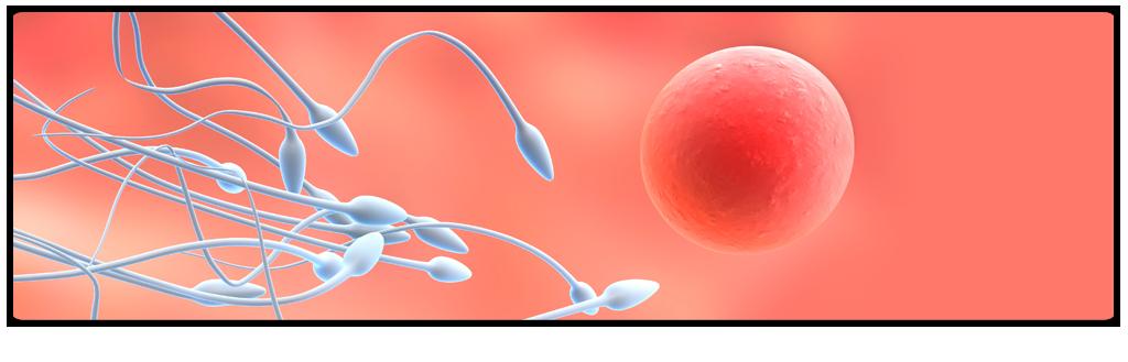Testicular Sperm Aspiration
